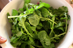Arugula source of nitrates