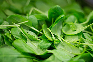 Spinach source of nitrates